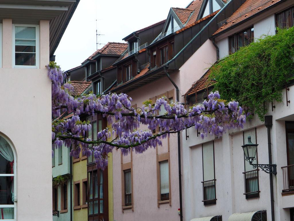20160516_Freiburg_im_Breisgau_033