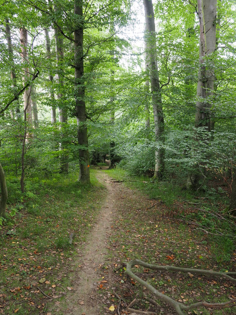 20160717_Spaziergang_in_der_Naehe_014