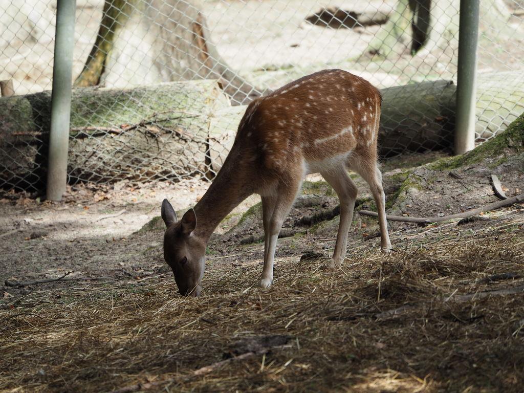 20160821_Tierpark_Bretten_006