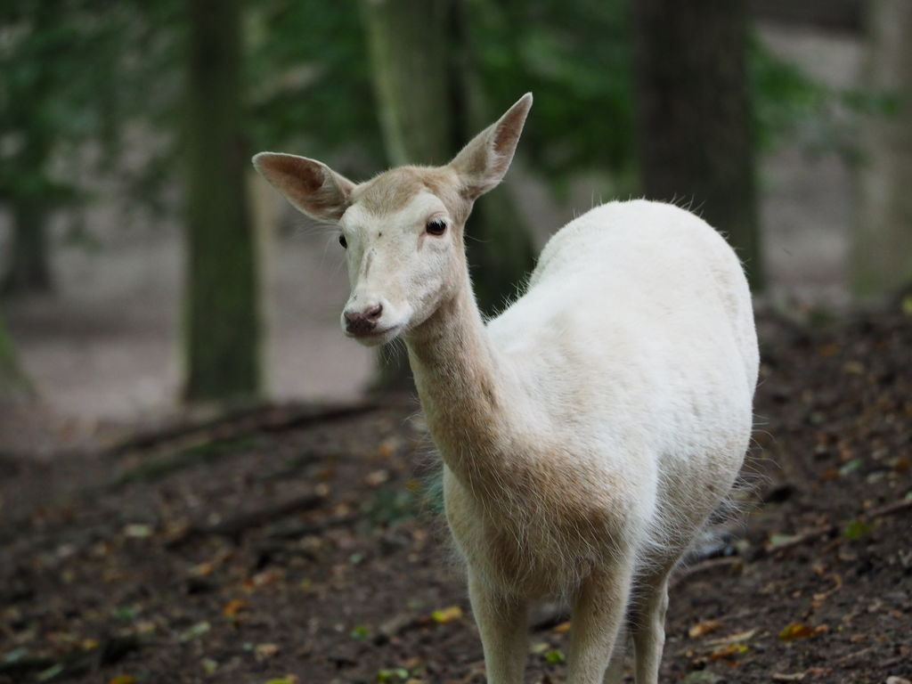 20160821_Tierpark_Bretten_013