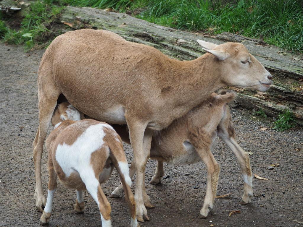 20160821_Tierpark_Bretten_025