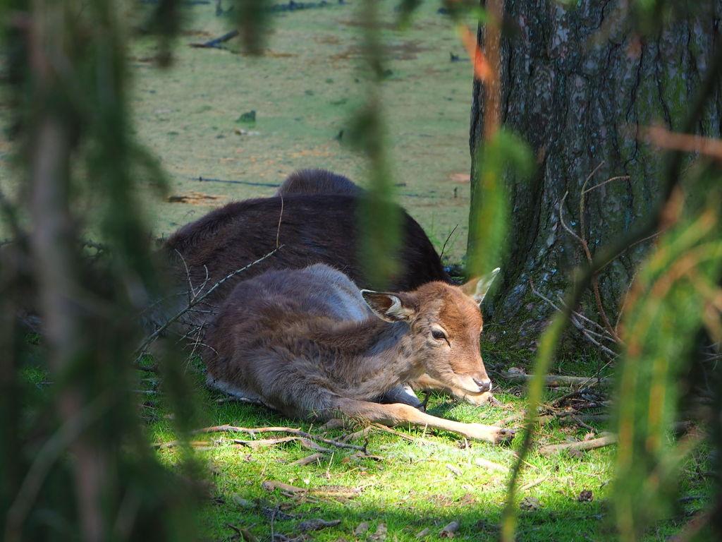 20170409_Wildpark_Schwarzach_036