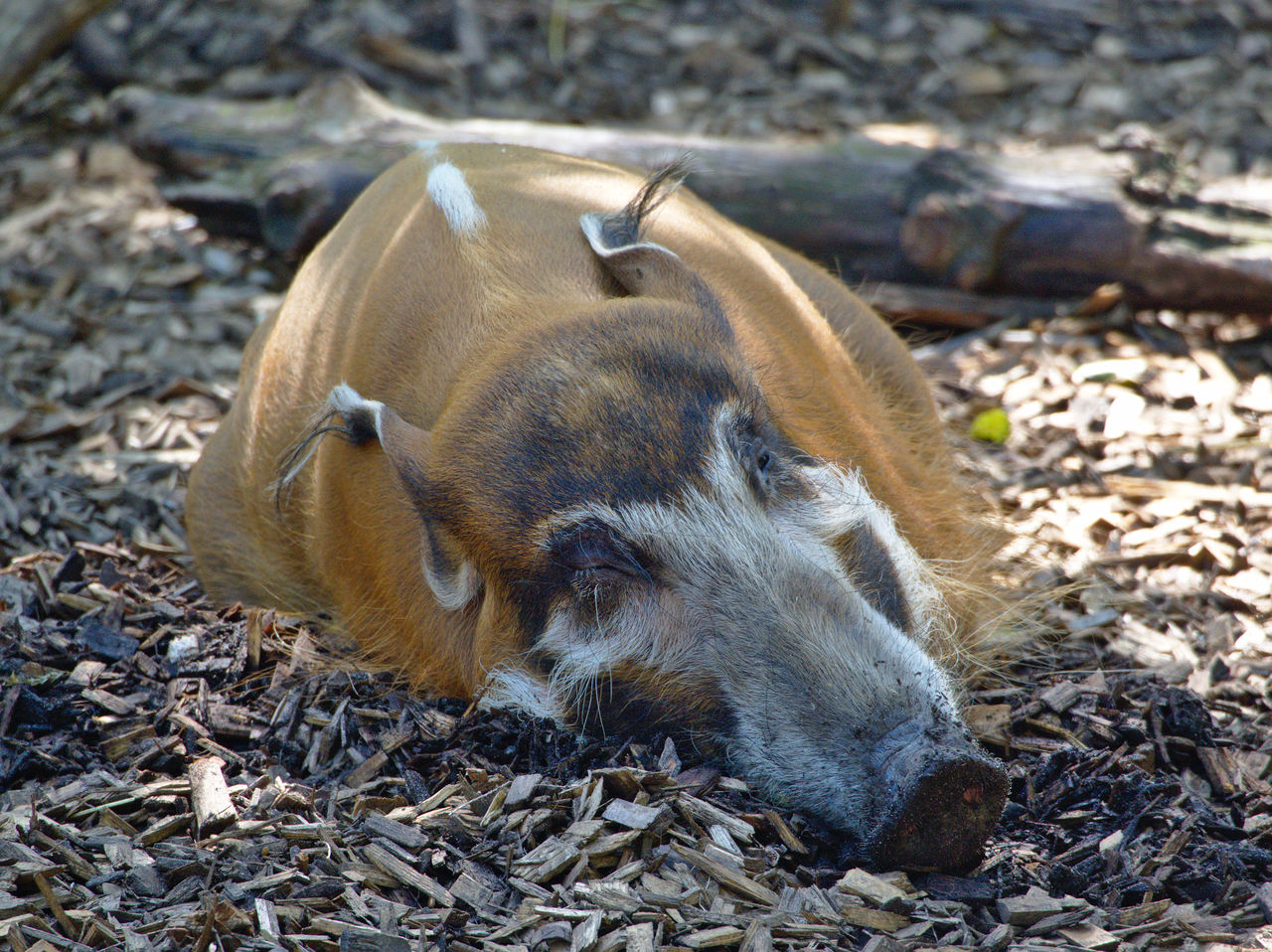 20190613_Zoo_Landau_026