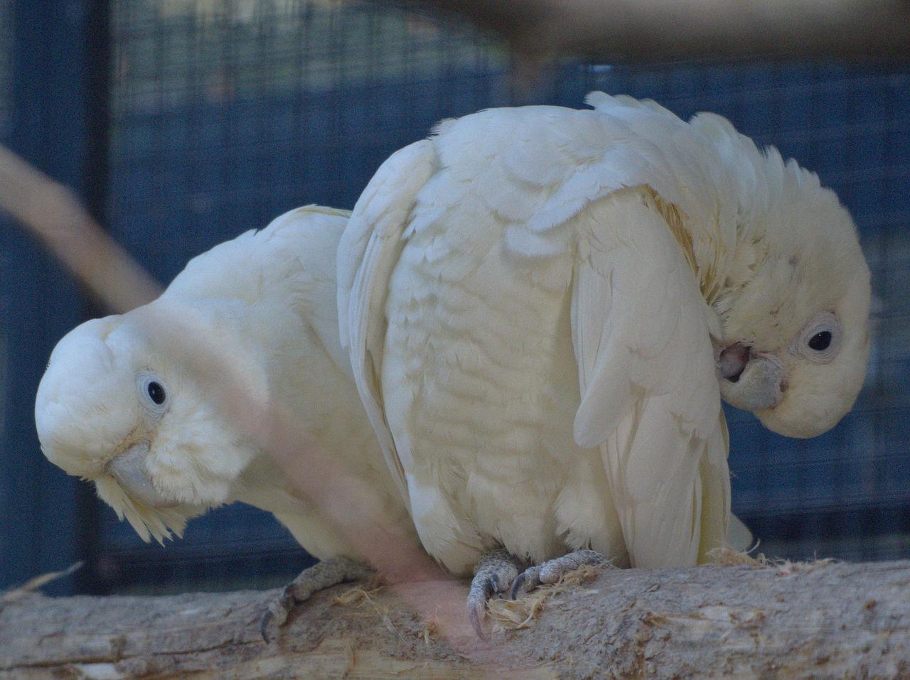 20190613_Zoo_Landau_056