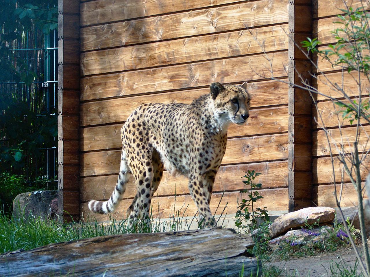 20190613_Zoo_Landau_059
