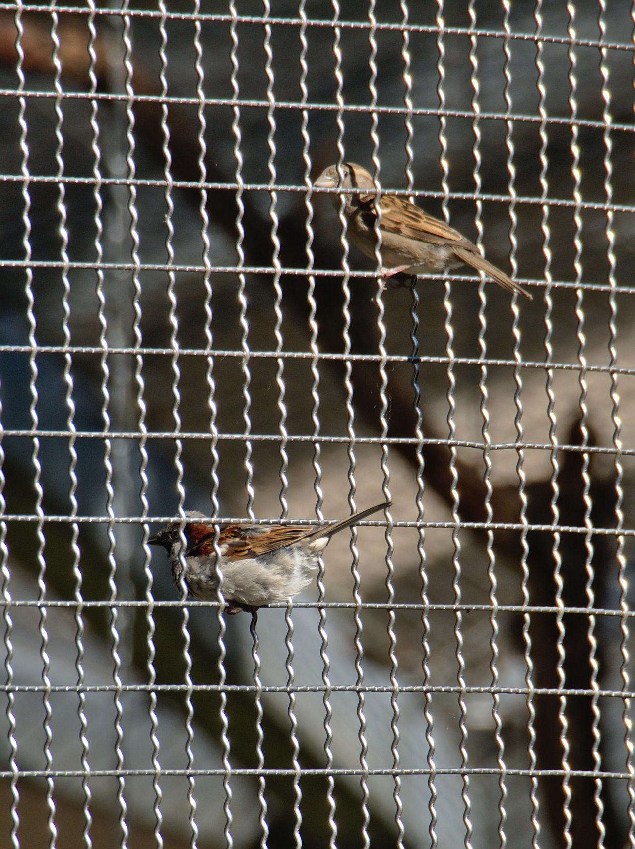 20190613_Zoo_Landau_075