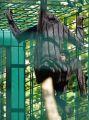 20190613_Zoo_Landau_012