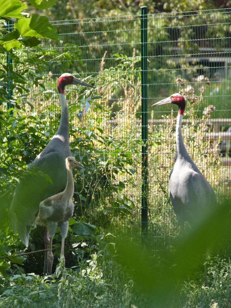 20190825_Zoologischer_Garten_Karlsruhe_037