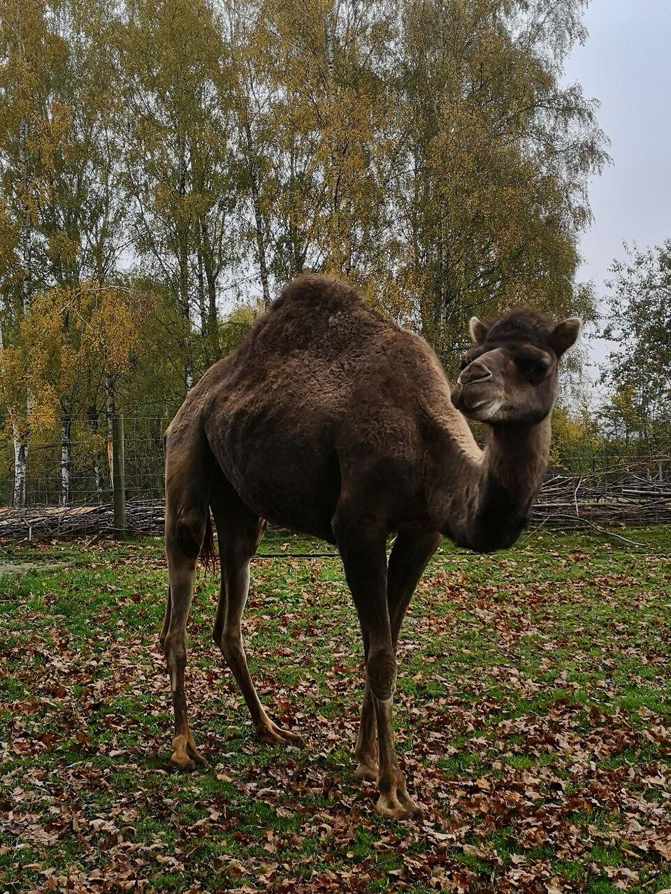 20191101_Wildpark_Schwarzach001