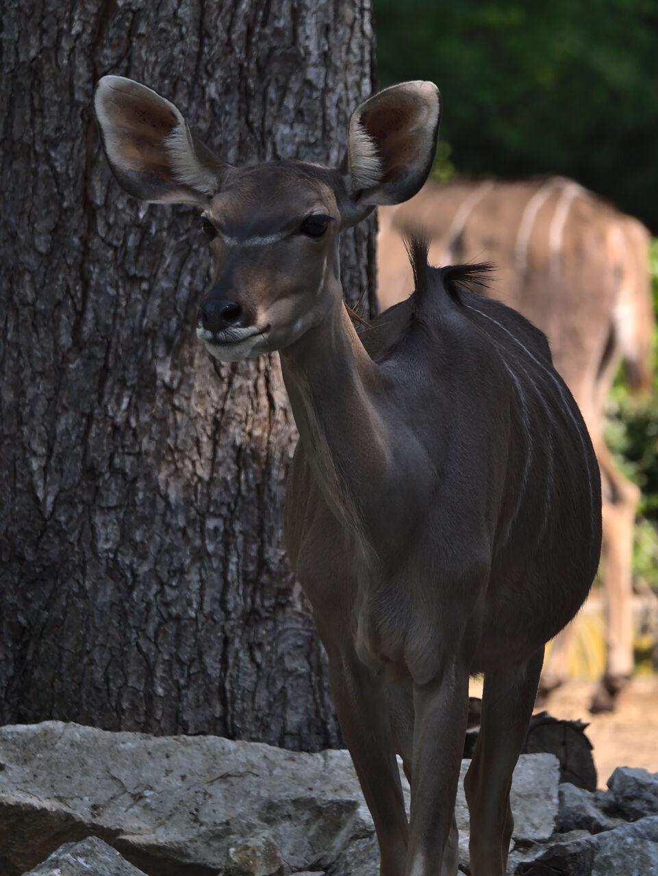 20200517_Heidelberger_Zoo_031