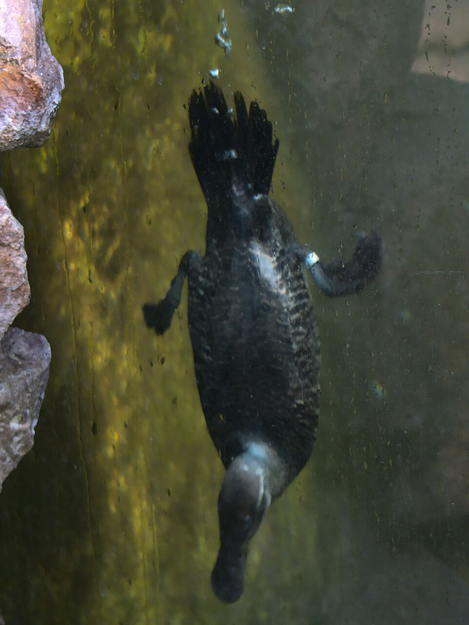 20200517_Heidelberger_Zoo_037