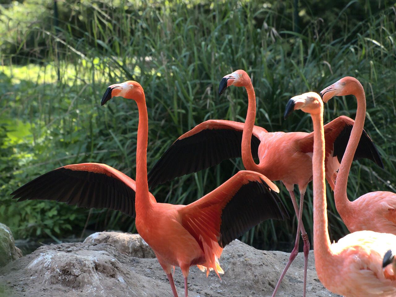 20200517_Heidelberger_Zoo_052