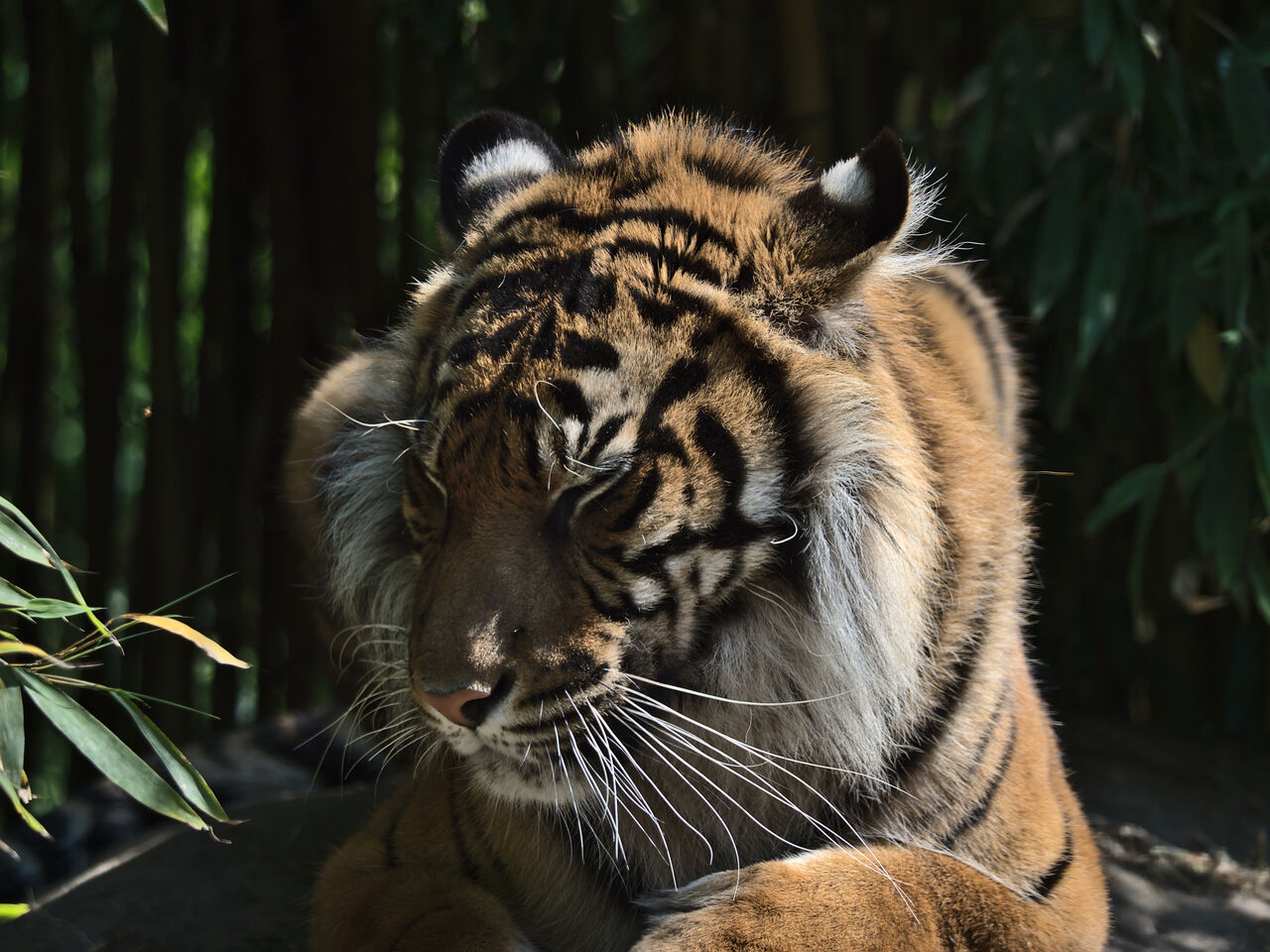 20200517_Heidelberger_Zoo_055