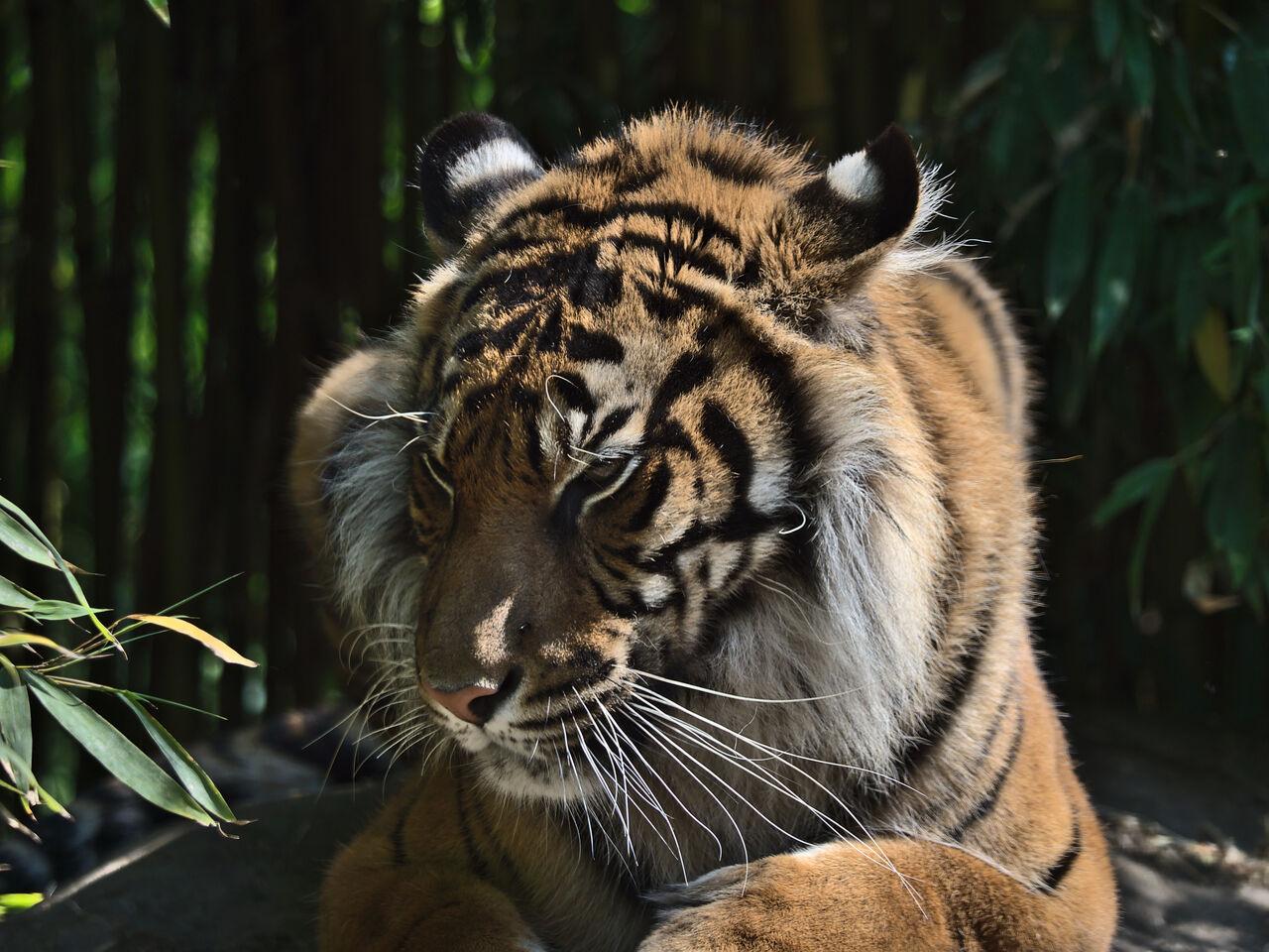 20200517_Heidelberger_Zoo_056