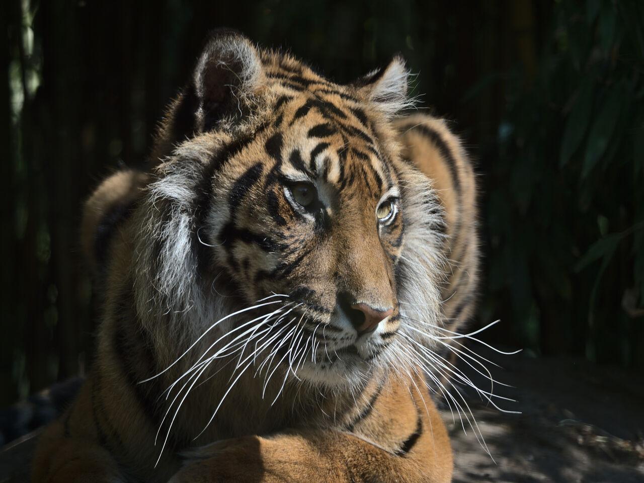 20200517_Heidelberger_Zoo_058
