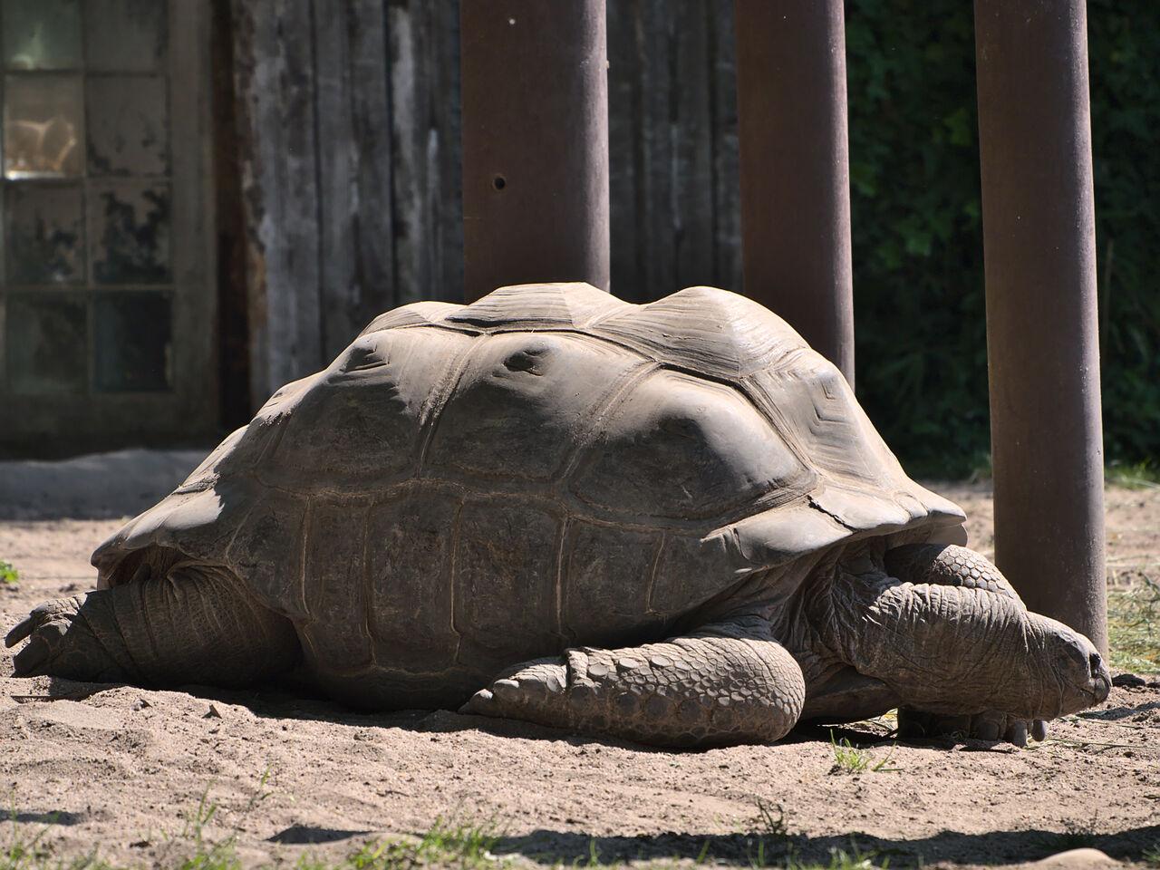 20200517_Heidelberger_Zoo_061