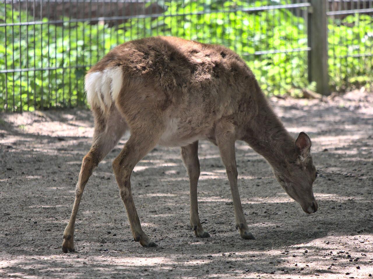 20200521_Tierpark_Walldorf_013
