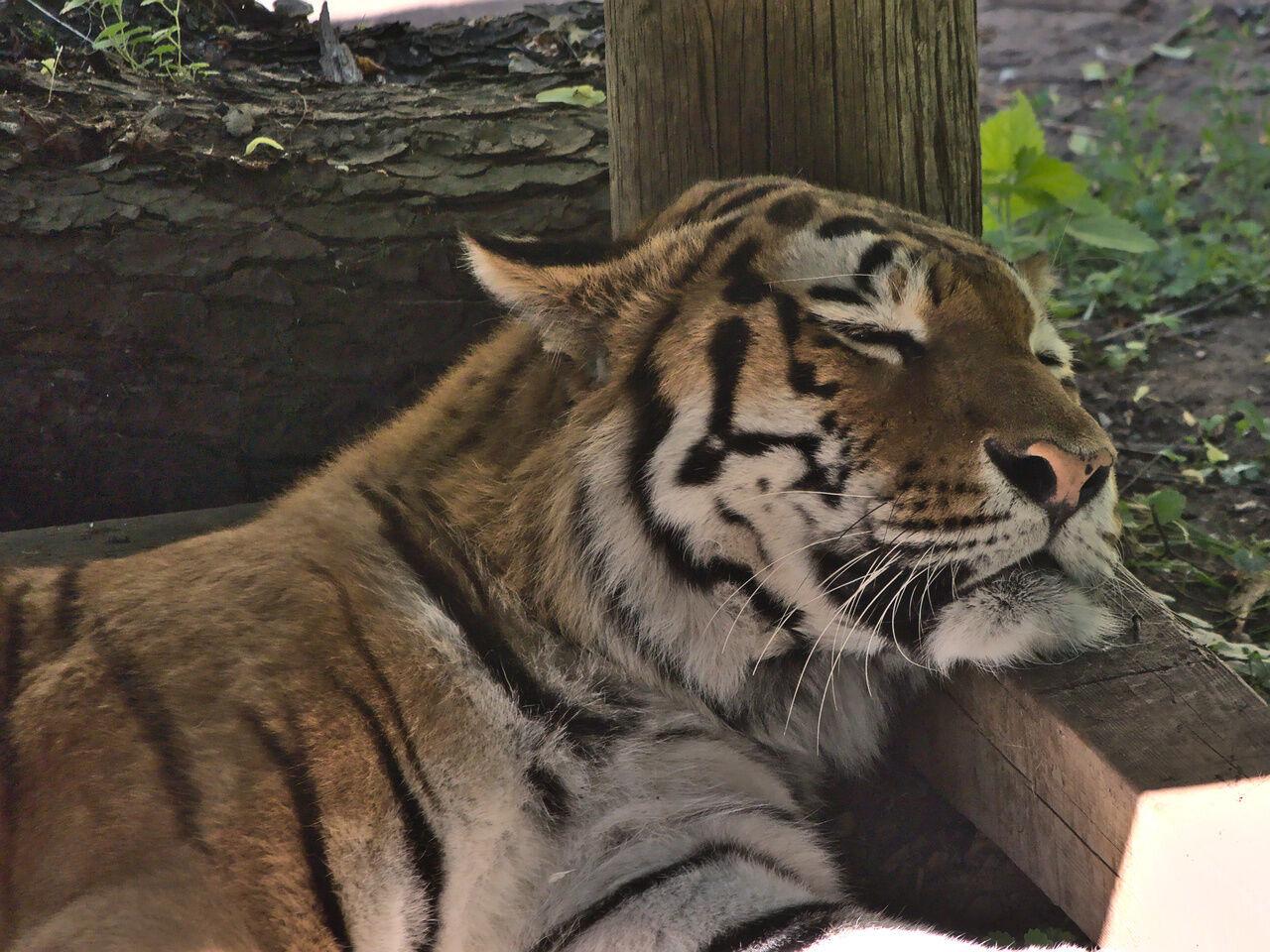 20200524_Zoo_Landau_001