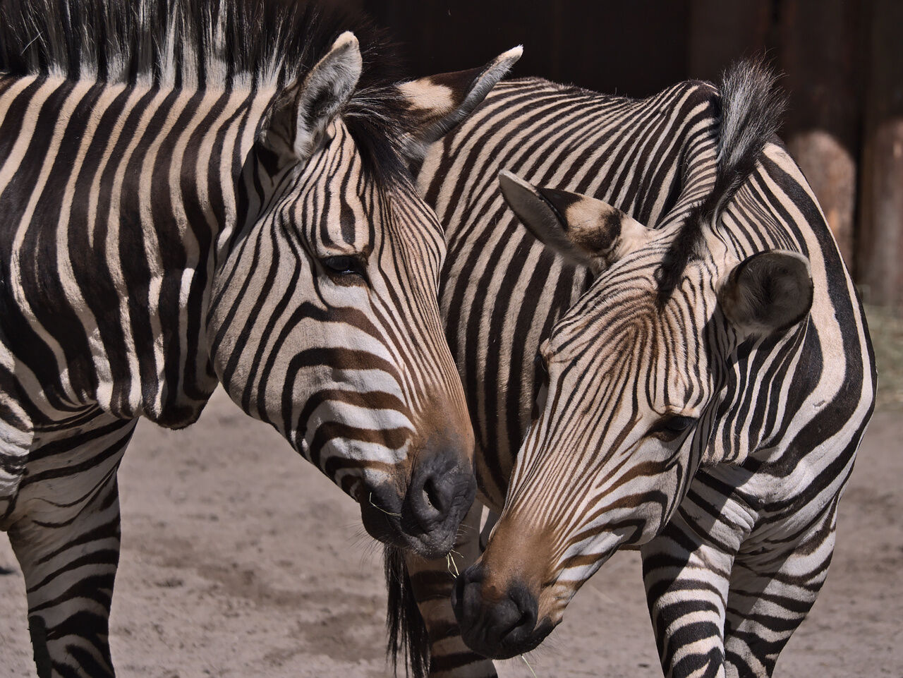 20200524_Zoo_Landau_016