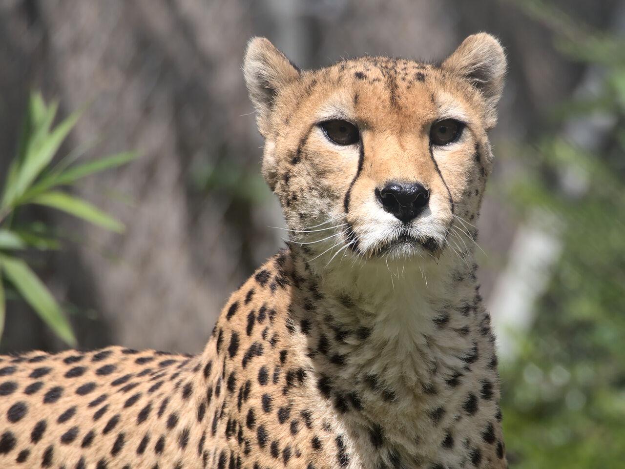 20200524_Zoo_Landau_035