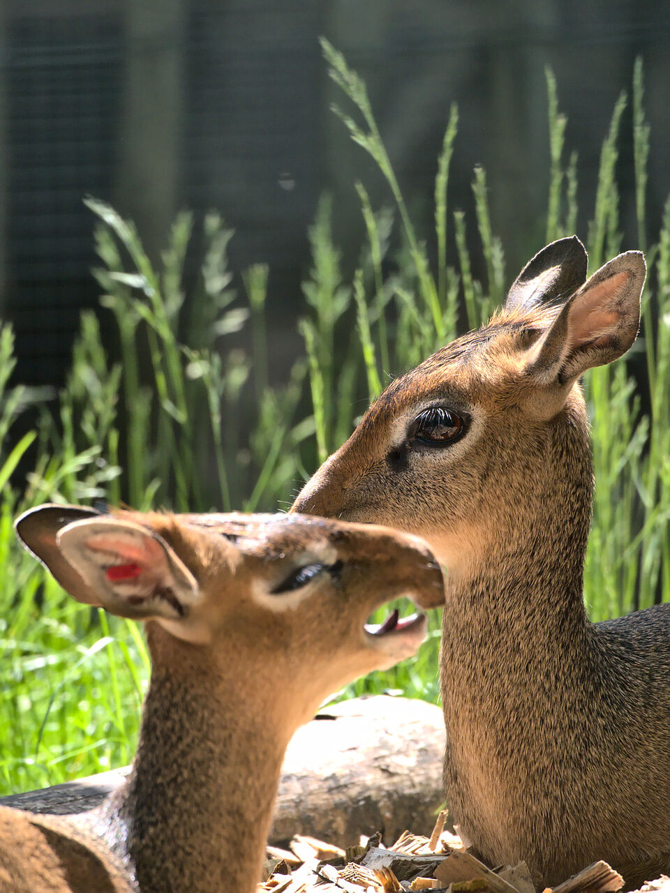 20200524_Zoo_Landau_052