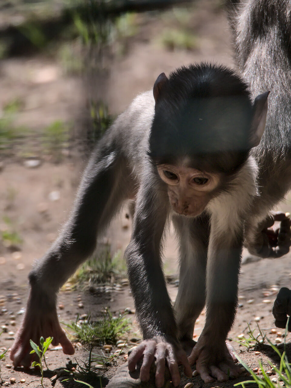 20200524_Zoo_Landau_063