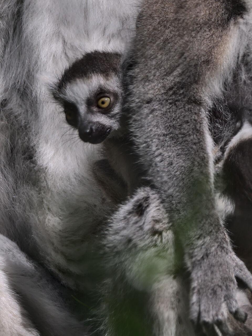 20200524_Zoo_Landau_069