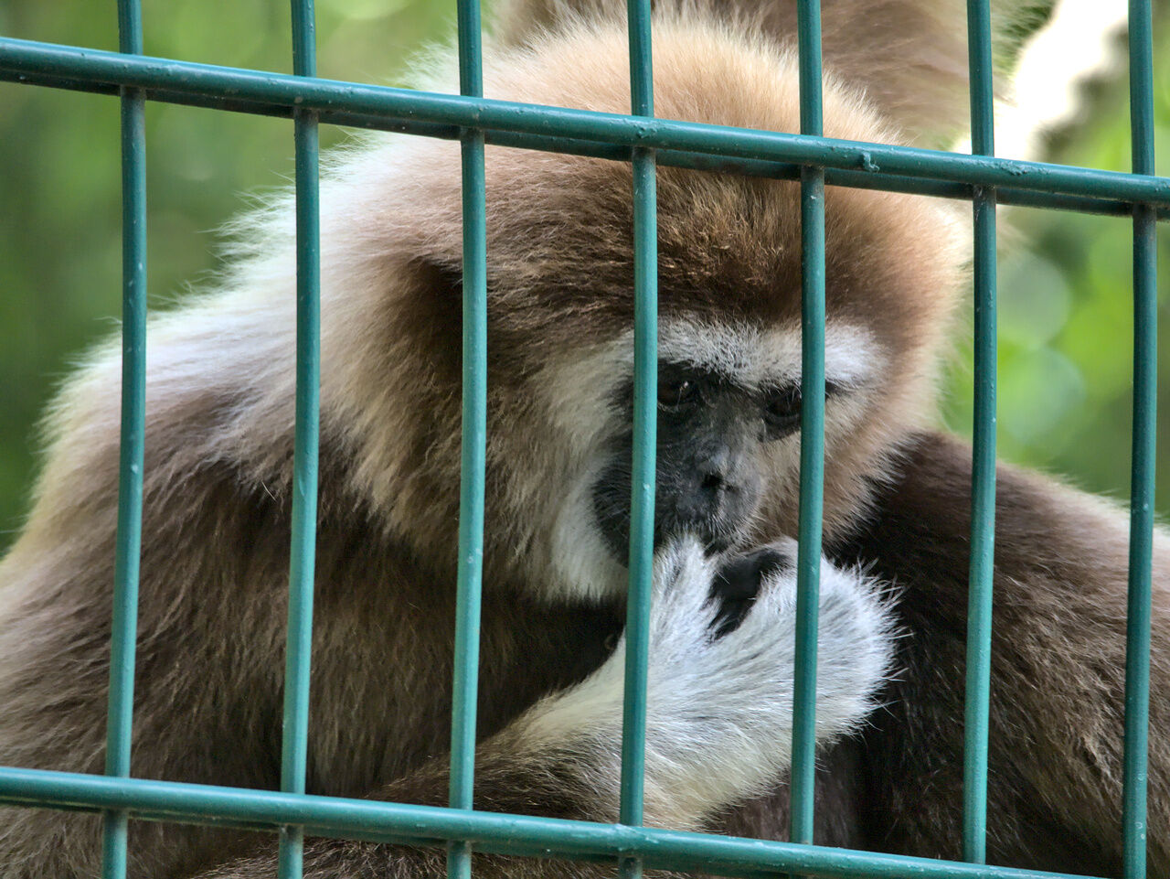 20200524_Zoo_Landau_074
