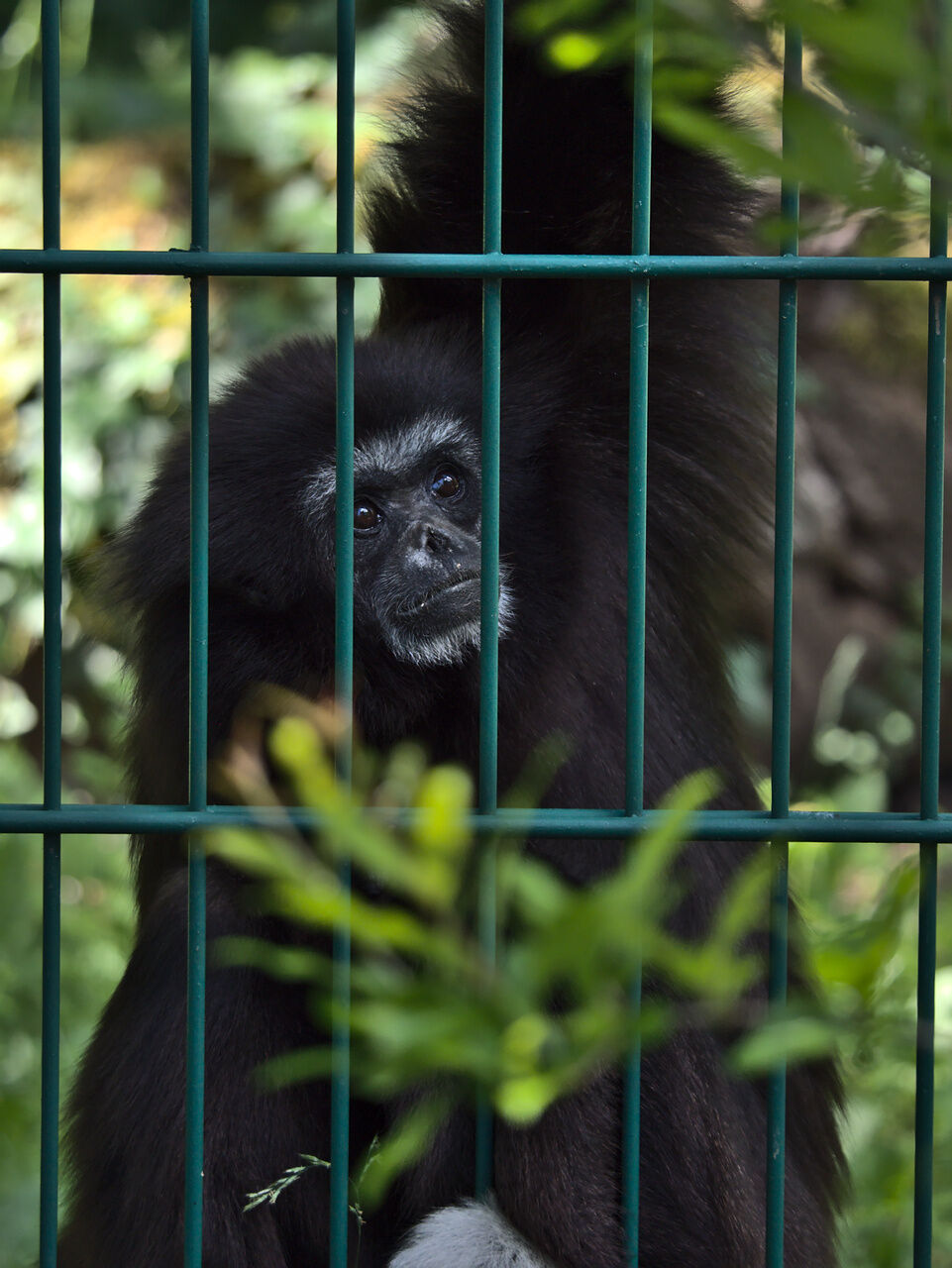 20200524_Zoo_Landau_075