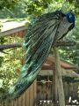 20200524_Zoo_Landau_049