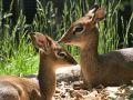20200524_Zoo_Landau_053