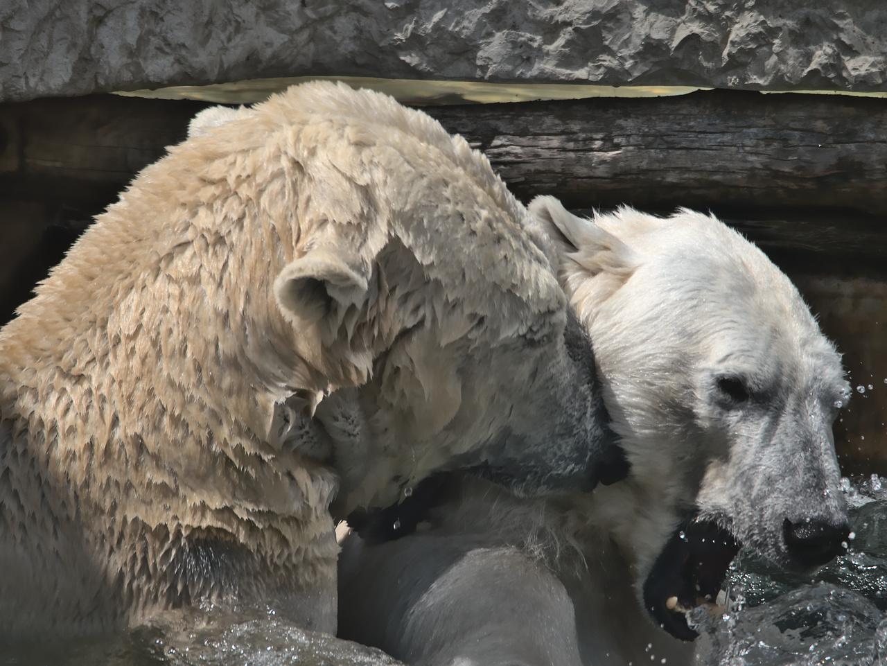 20200601_Zoo_Karlsruhe_011